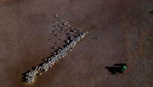 Catholic school student raises $1 million for Australia's drought affected farmers